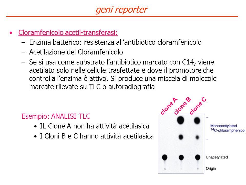 geni reporter Cloramfenicolo acetil-transferasi: