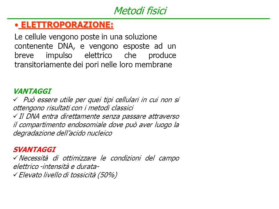 Metodi fisici ELETTROPORAZIONE:
