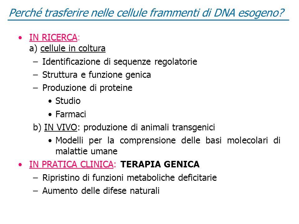Perché trasferire nelle cellule frammenti di DNA esogeno