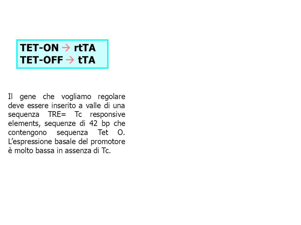 TET-ON  rtTA TET-OFF  tTA