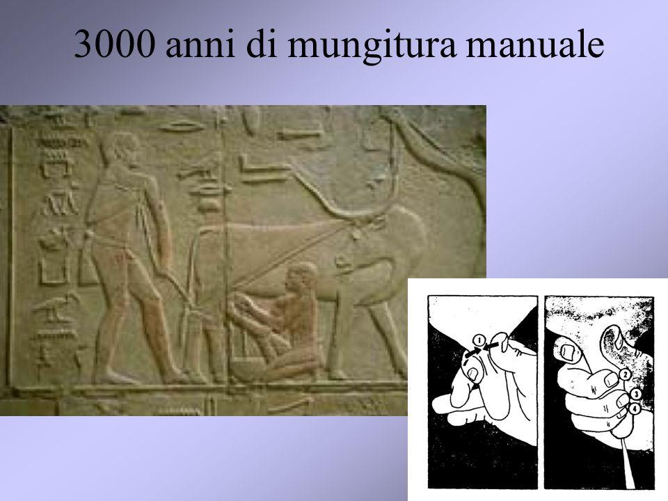 3000 anni di mungitura manuale