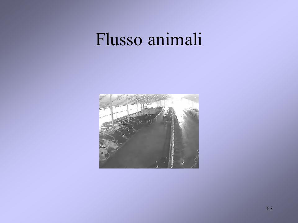 Flusso animali