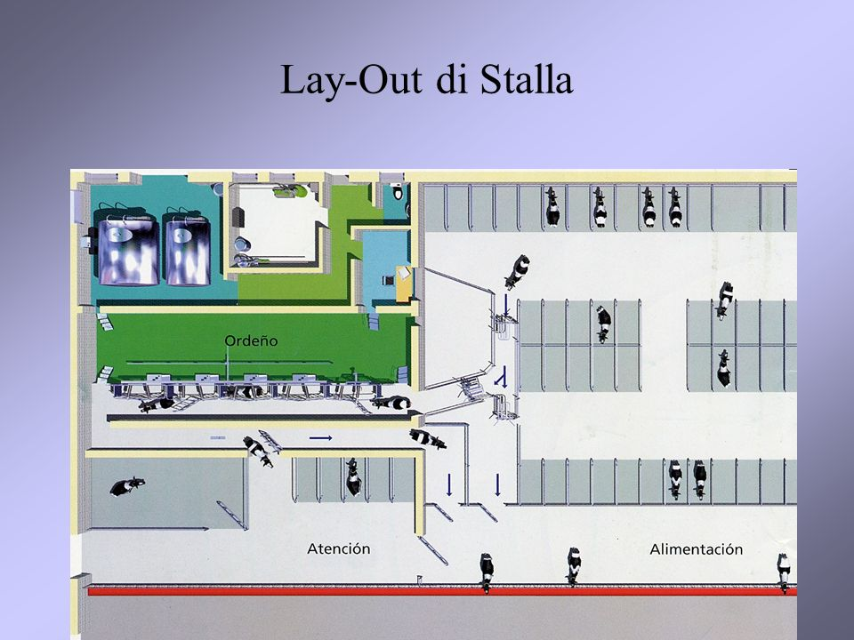 Lay-Out di Stalla