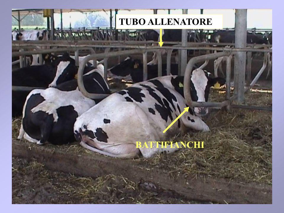 TUBO ALLENATORE BATTIFIANCHI