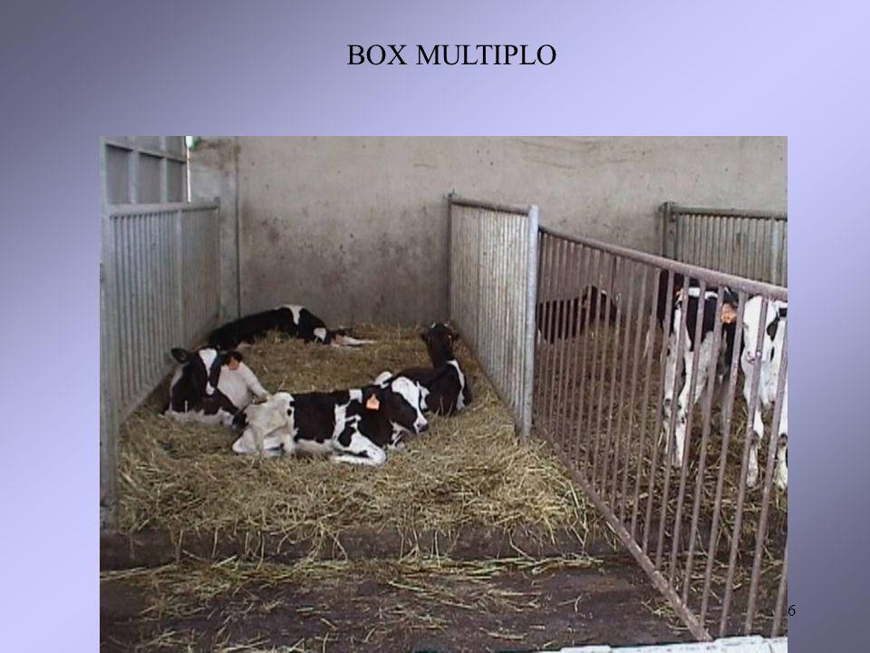 BOX MULTIPLO