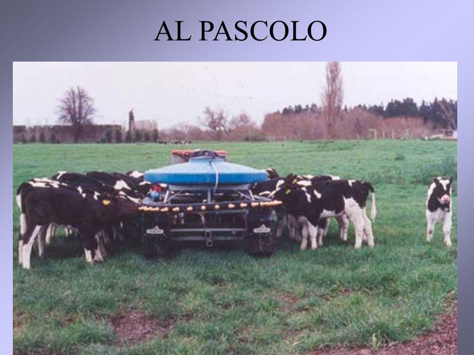 AL PASCOLO