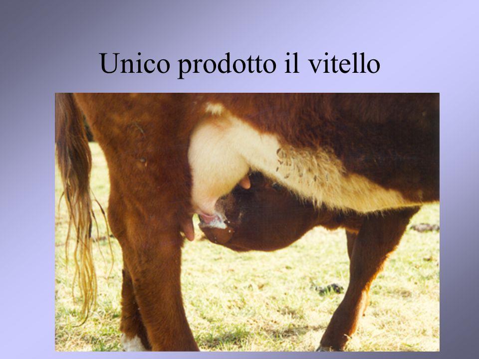 Unico prodotto il vitello