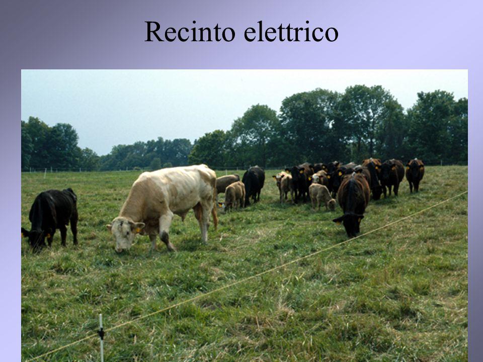 Recinto elettrico