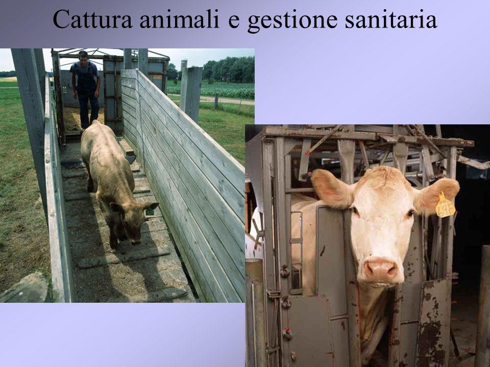 Cattura animali e gestione sanitaria