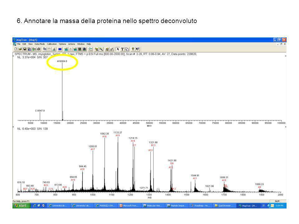 6. Annotare la massa della proteina nello spettro deconvoluto
