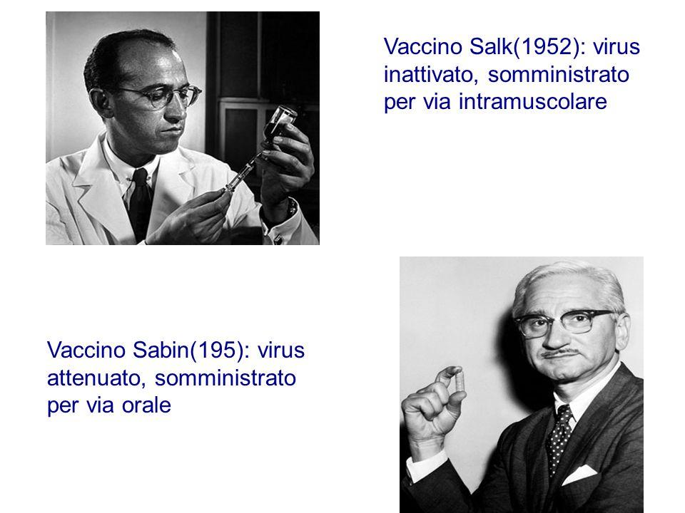 Vaccino Salk(1952): virus inattivato, somministrato per via intramuscolare