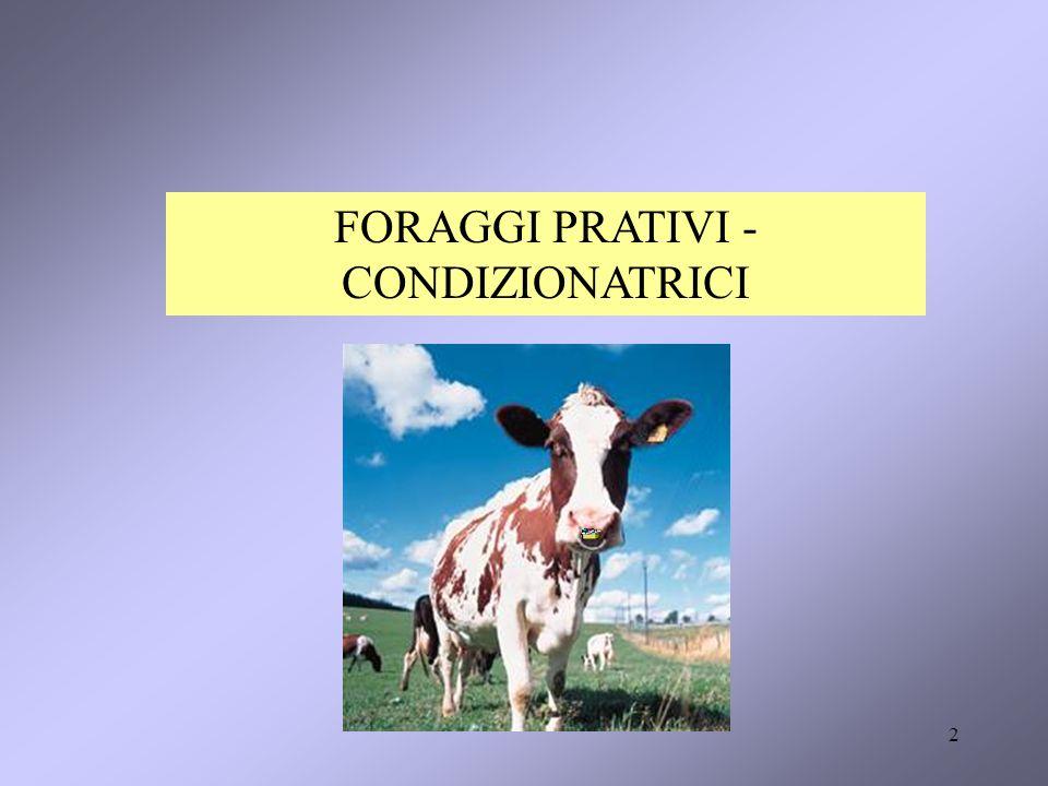 FORAGGI PRATIVI - CONDIZIONATRICI