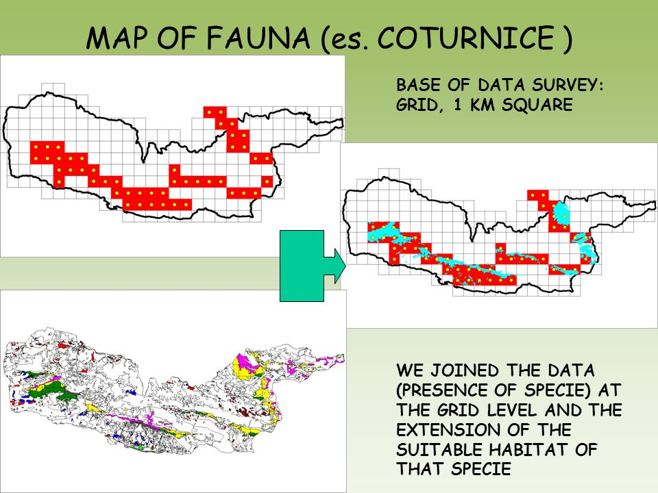 MAP OF FAUNA (es. COTURNICE )