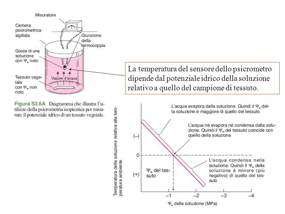 La temperatura del sensore dello psicrometro dipende dal potenziale idrico della soluzione relativo a quello del campione di tessuto.