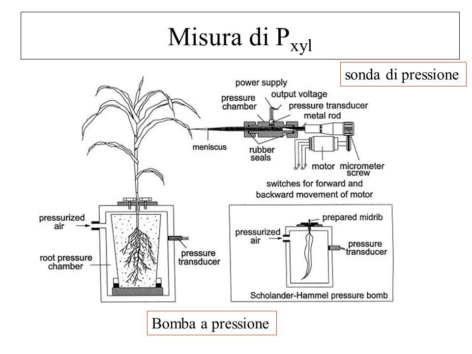 Misura di Pxyl sonda di pressione Bomba a pressione