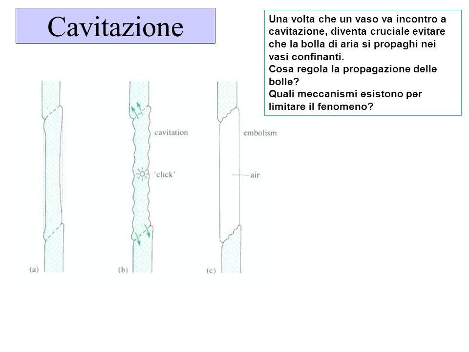 Cavitazione Una volta che un vaso va incontro a cavitazione, diventa cruciale evitare che la bolla di aria si propaghi nei vasi confinanti.