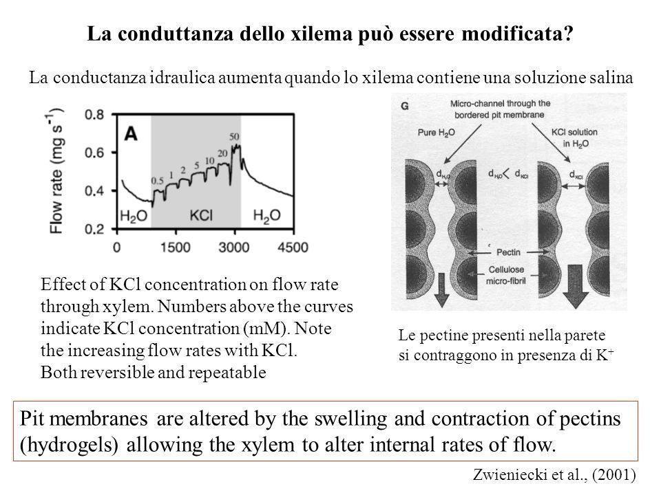 La conduttanza dello xilema può essere modificata