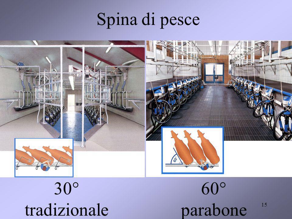 Spina di pesce 30° tradizionale 60° parabone