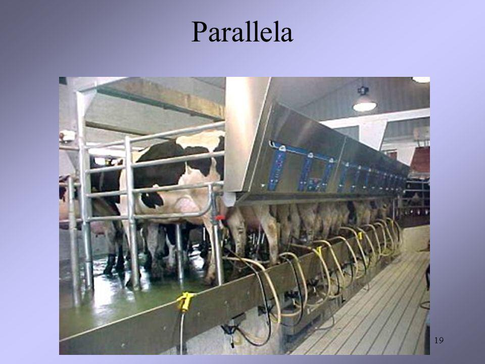 Parallela