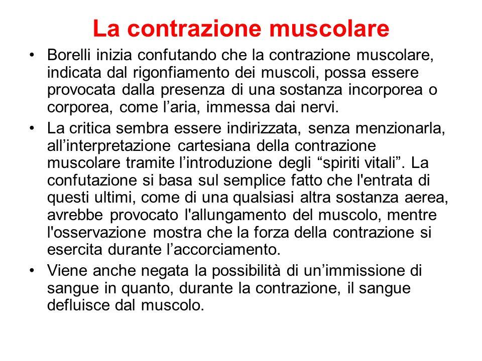 La contrazione muscolare