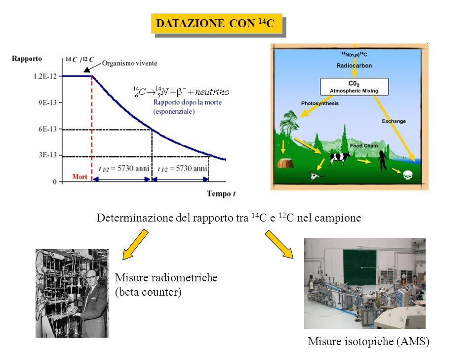 Determinazione del rapporto tra 14C e 12C nel campione