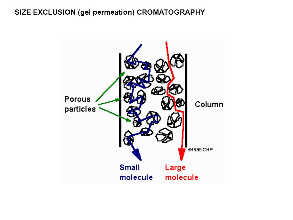SIZE EXCLUSION (gel permeation) CROMATOGRAPHY