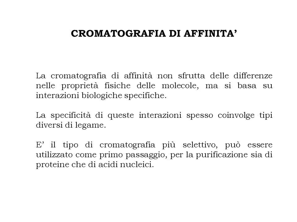 CROMATOGRAFIA DI AFFINITA'