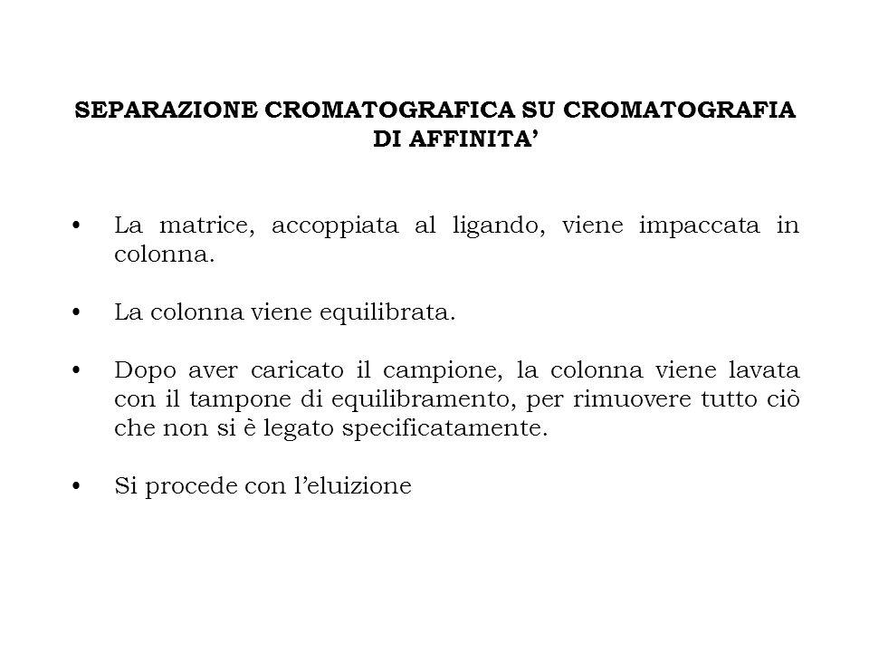 SEPARAZIONE CROMATOGRAFICA SU CROMATOGRAFIA DI AFFINITA'