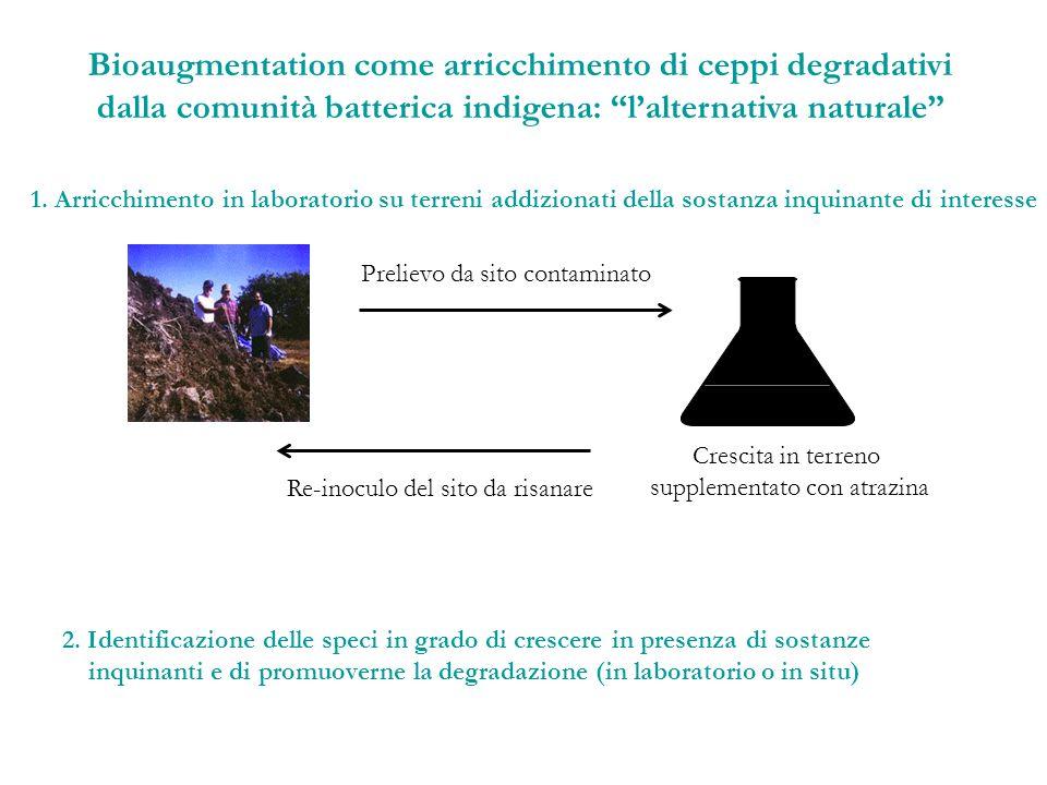 Bioaugmentation come arricchimento di ceppi degradativi