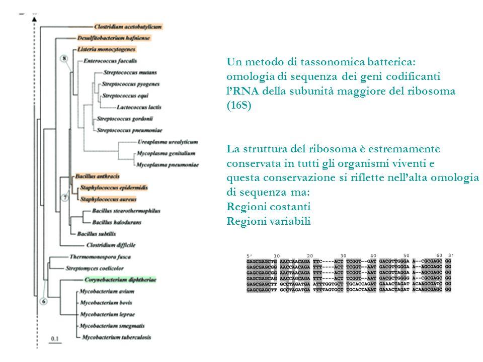 Un metodo di tassonomica batterica: