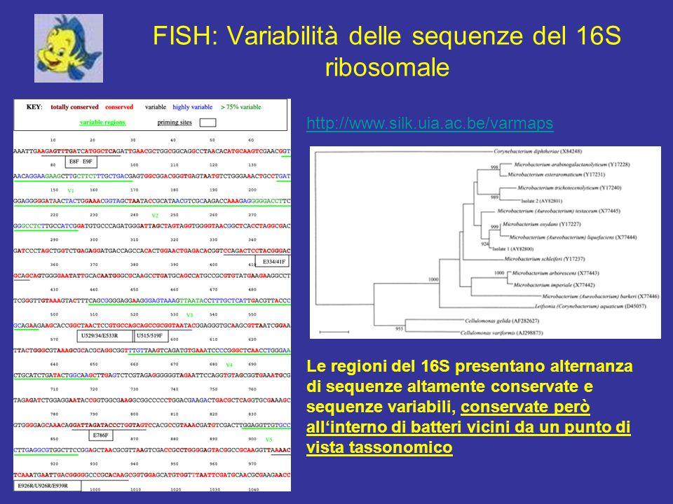FISH: Variabilità delle sequenze del 16S ribosomale