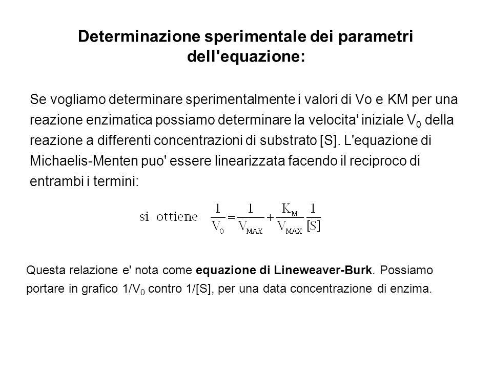 Determinazione sperimentale dei parametri dell equazione: