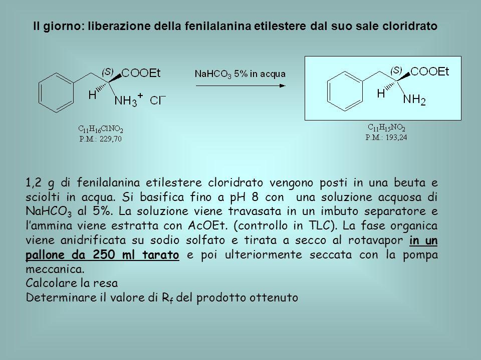 II giorno: liberazione della fenilalanina etilestere dal suo sale cloridrato