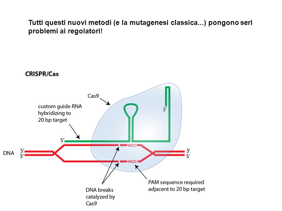 Tutti questi nuovi metodi (e la mutagenesi classica