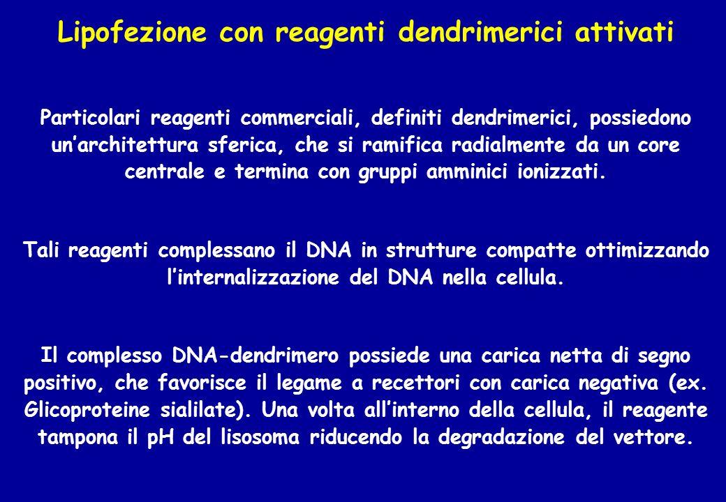 Lipofezione con reagenti dendrimerici attivati