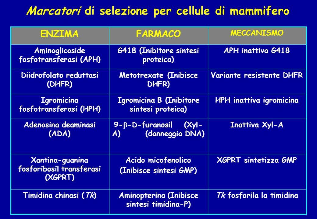 Marcatori di selezione per cellule di mammifero