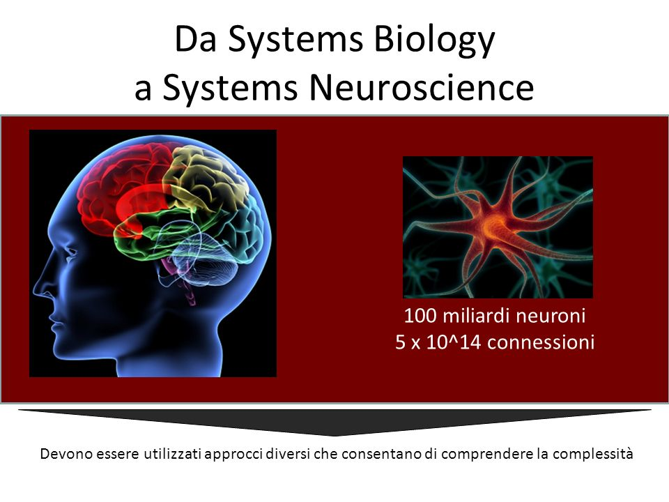 Da Systems Biology a Systems Neuroscience