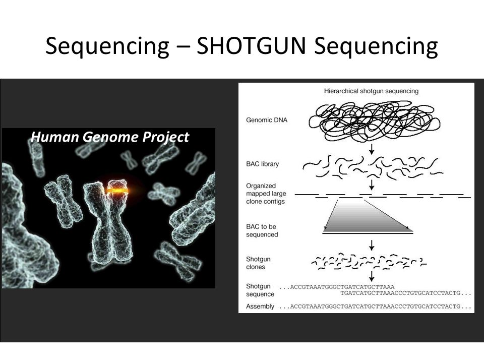 Sequencing – SHOTGUN Sequencing