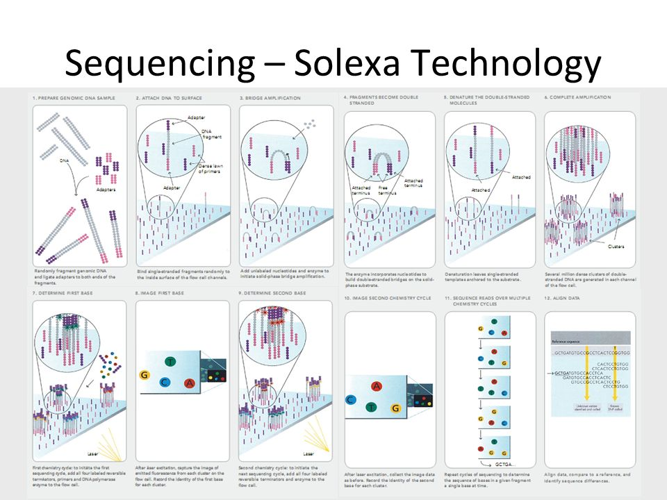 Sequencing – Solexa Technology