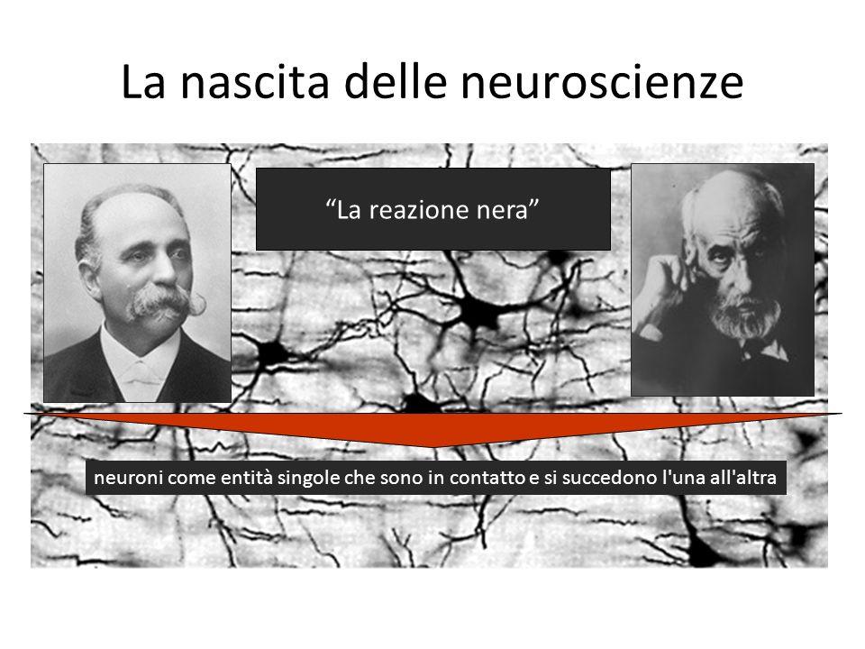 La nascita delle neuroscienze