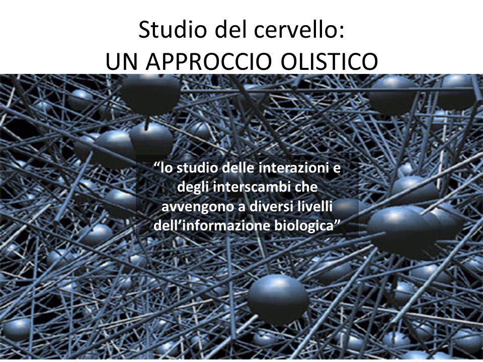 Studio del cervello: UN APPROCCIO OLISTICO