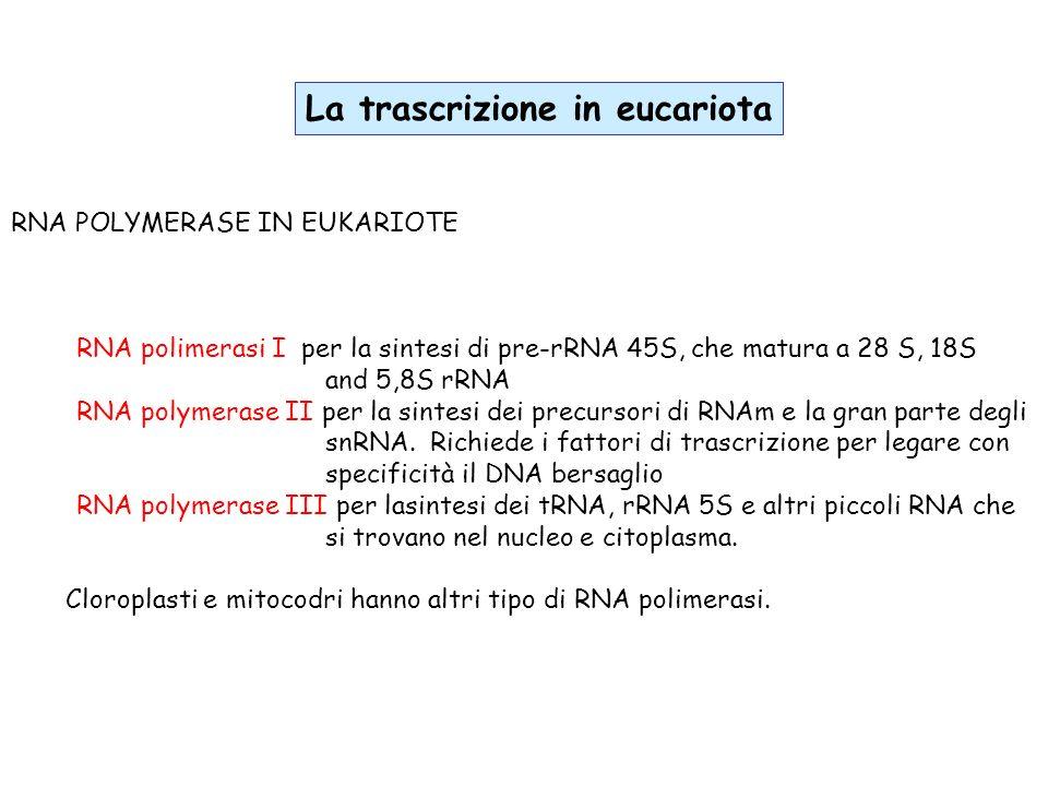 La trascrizione in eucariota