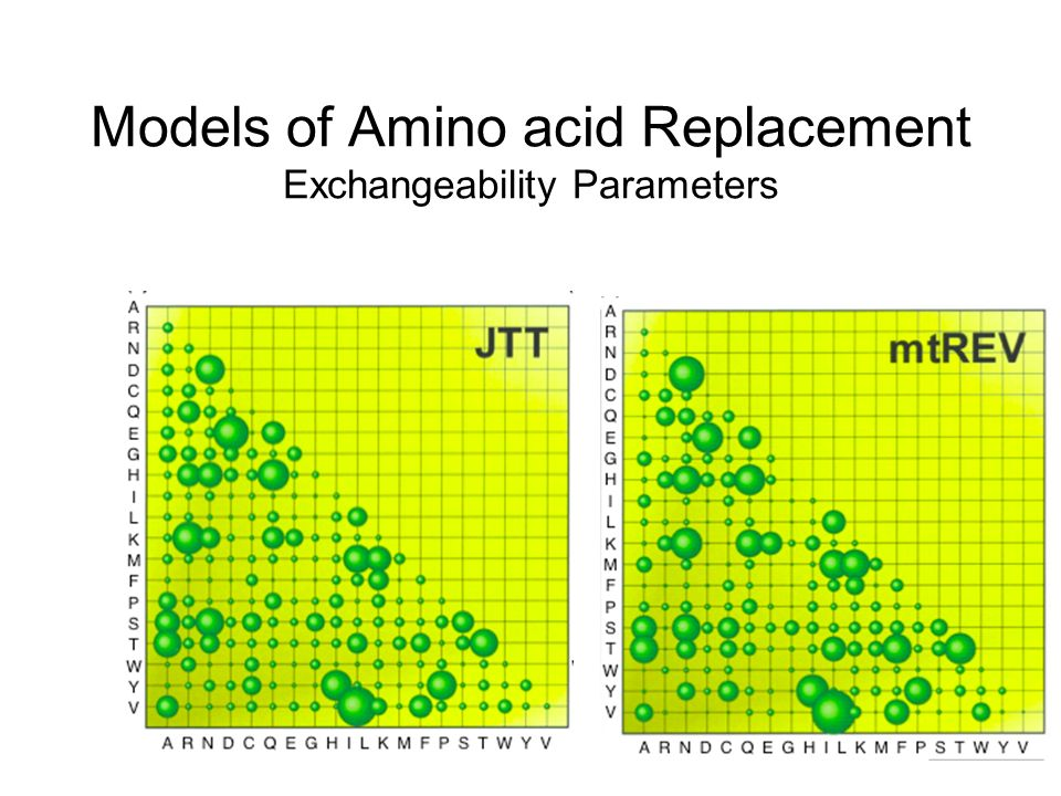 Models of Amino acid Replacement Exchangeability Parameters