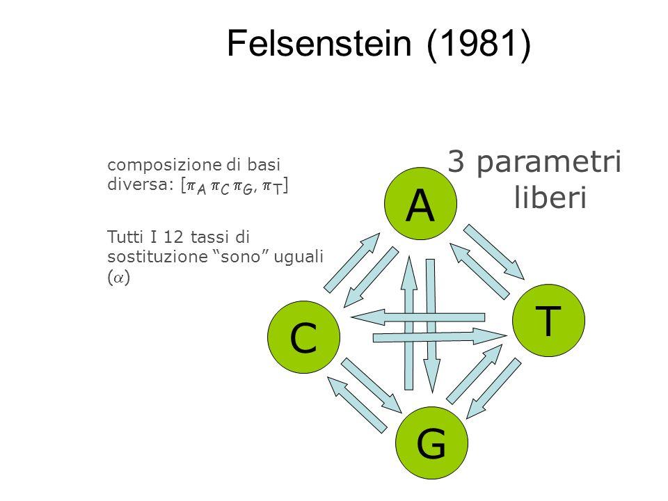 A T C G Felsenstein (1981) 3 parametri liberi