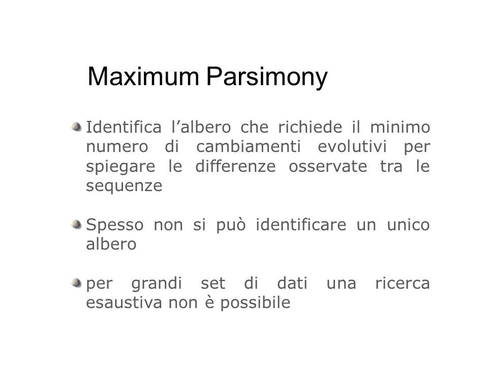 Maximum Parsimony Identifica l'albero che richiede il minimo numero di cambiamenti evolutivi per spiegare le differenze osservate tra le sequenze.