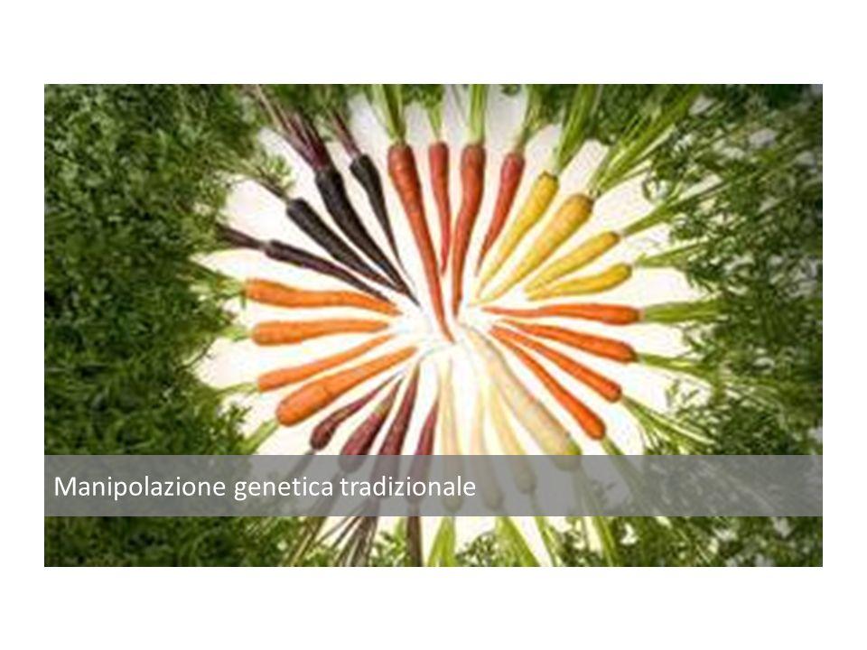 Manipolazione genetica tradizionale