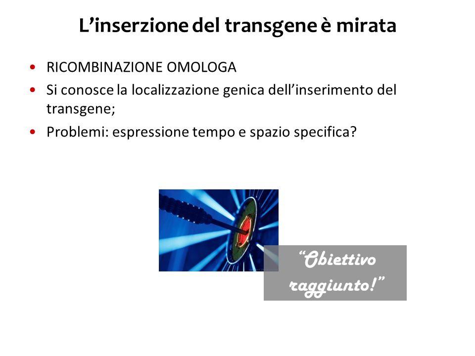 L'inserzione del transgene è mirata