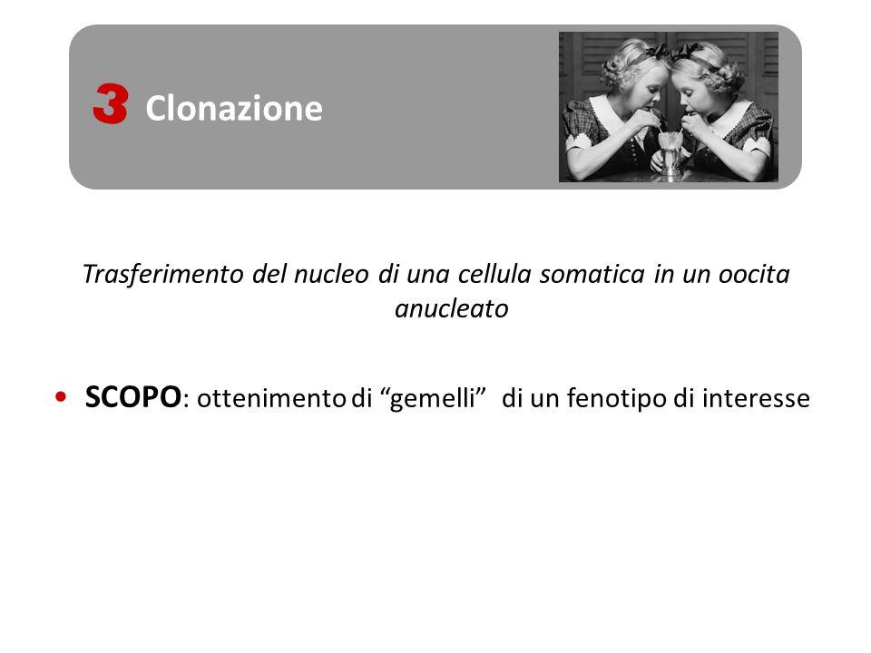 Clonazione3.Trasferimento del nucleo di una cellula somatica in un oocita anucleato.