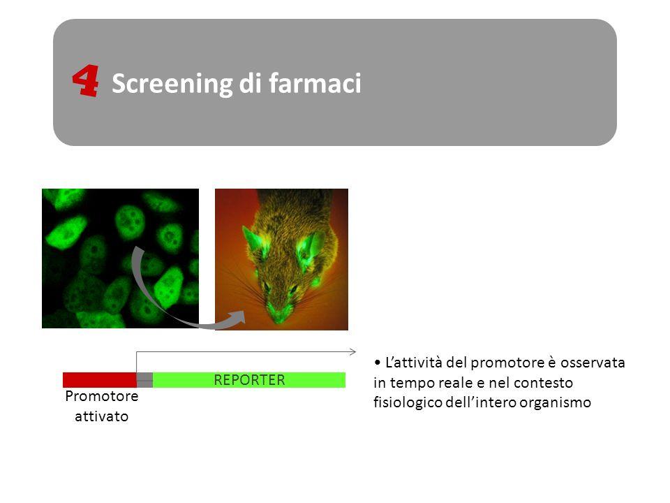 Screening di farmaci4. L'attività del promotore è osservata in tempo reale e nel contesto fisiologico dell'intero organismo.