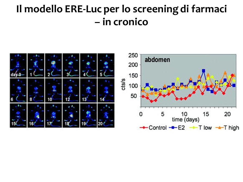 Il modello ERE-Luc per lo screening di farmaci – in cronico